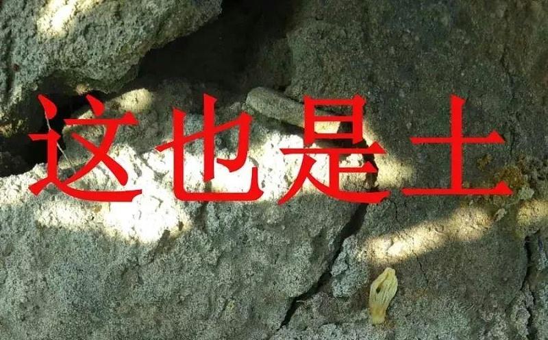寰�淇″�剧��_20210402140542